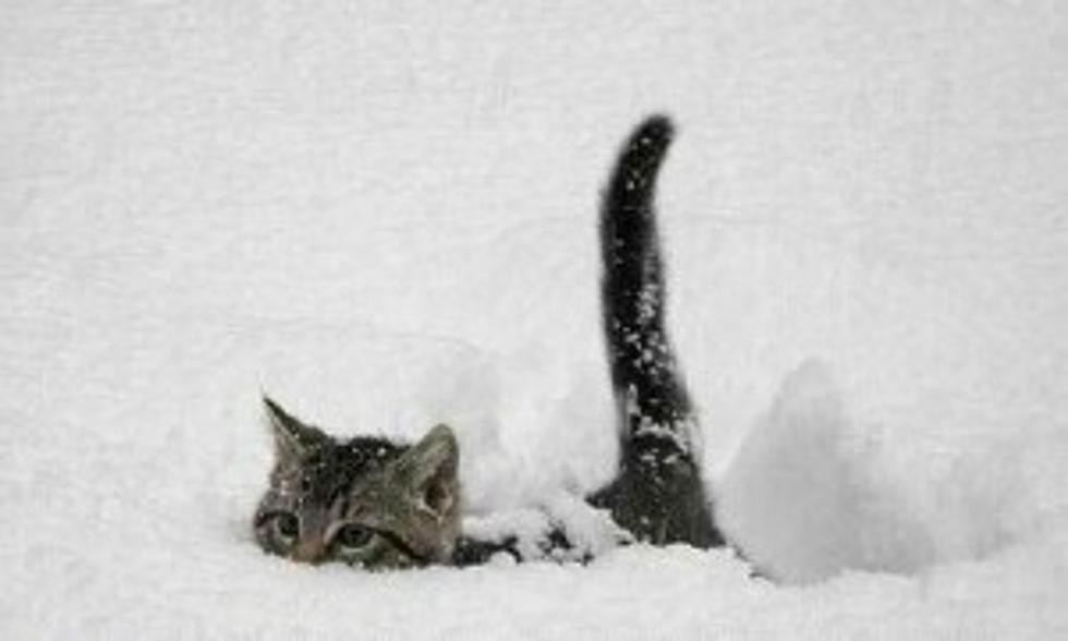 pets-in-snow